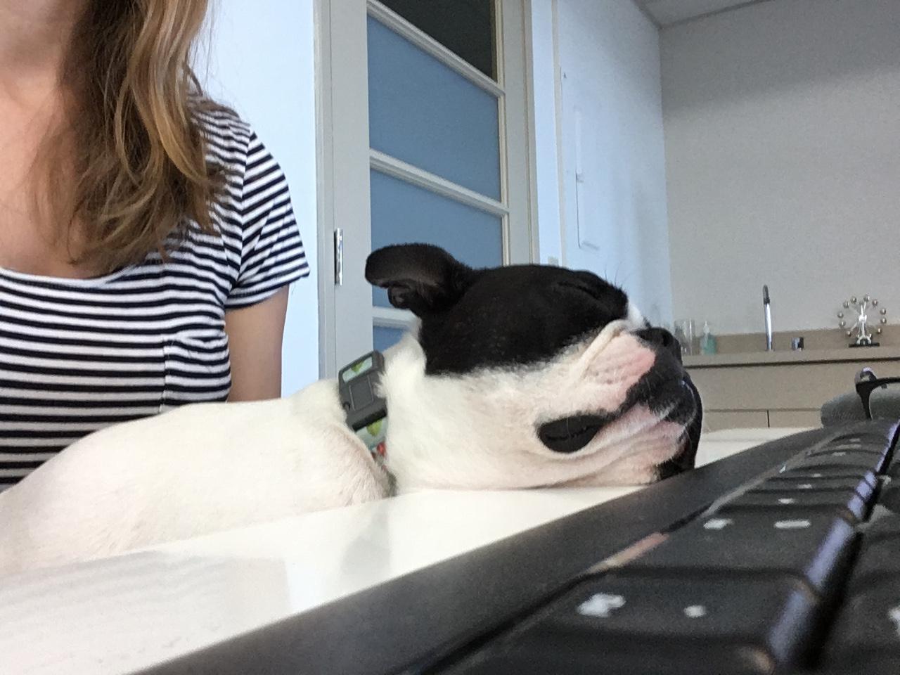 Luna literally sleeps all day long.