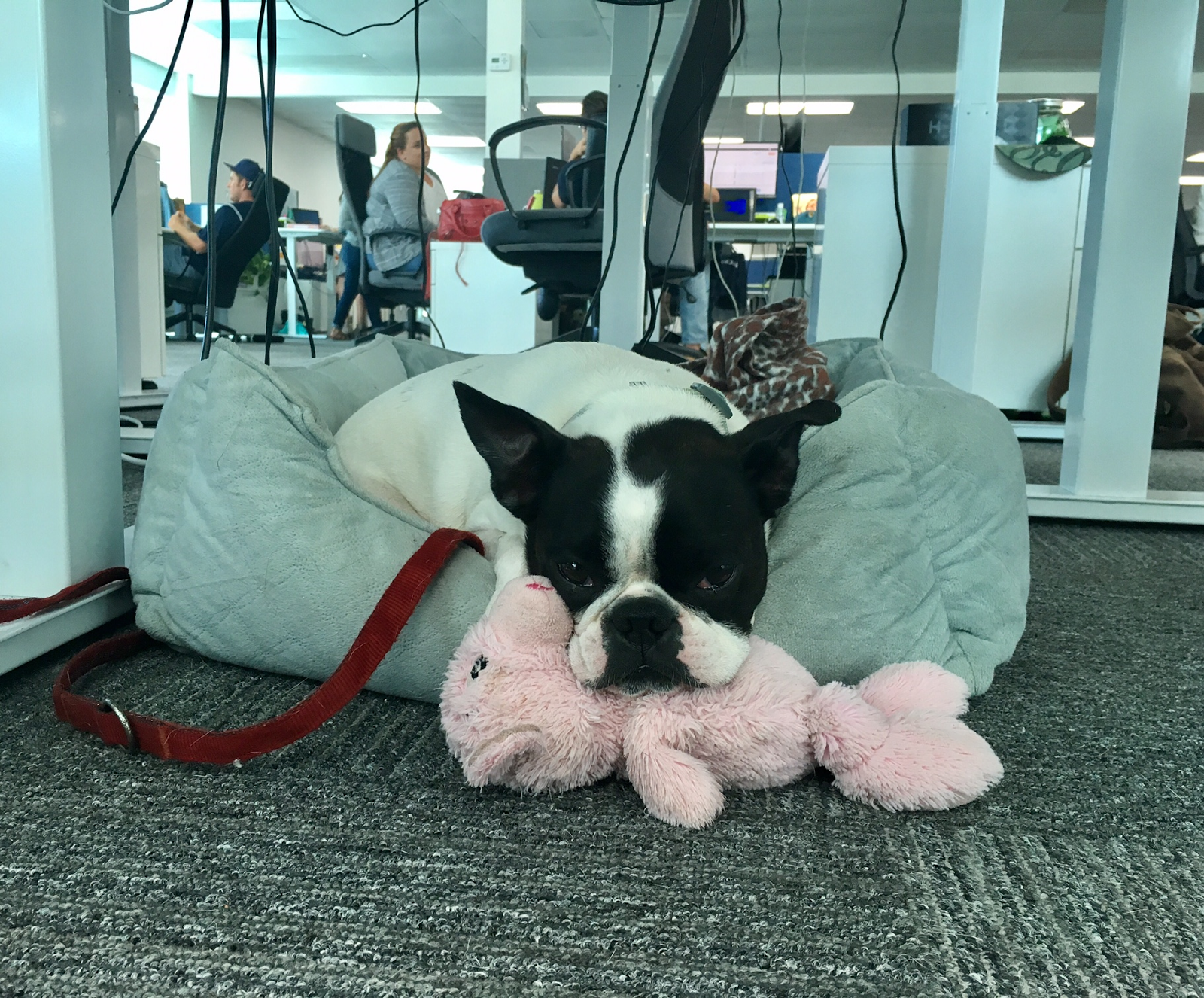 Plus, this isn't even her favorite PetDesk office toy!