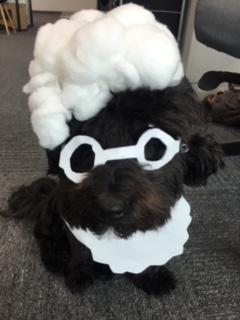 Costumes for office dogs are always encouraged.