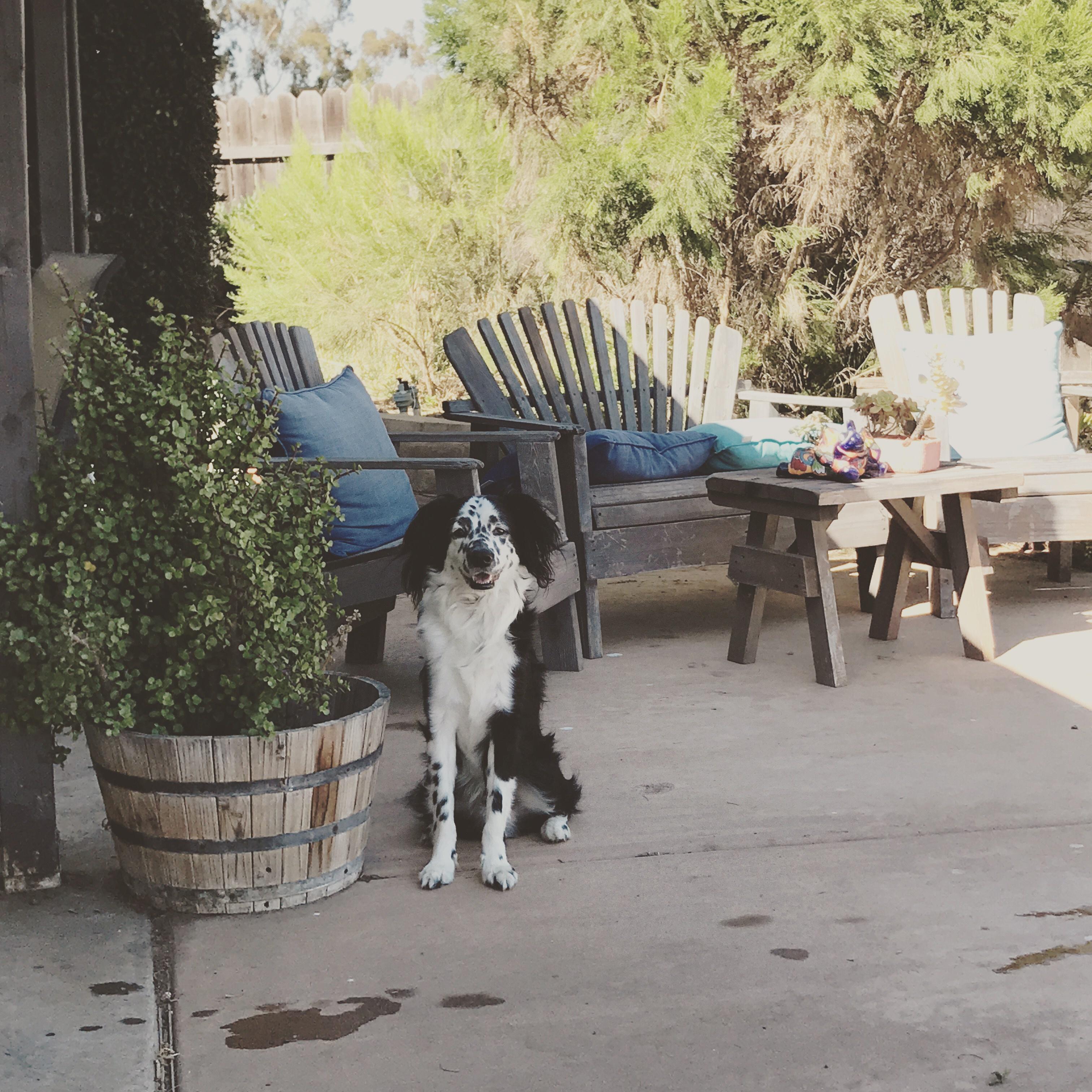 dog-lakai-patio.jpg