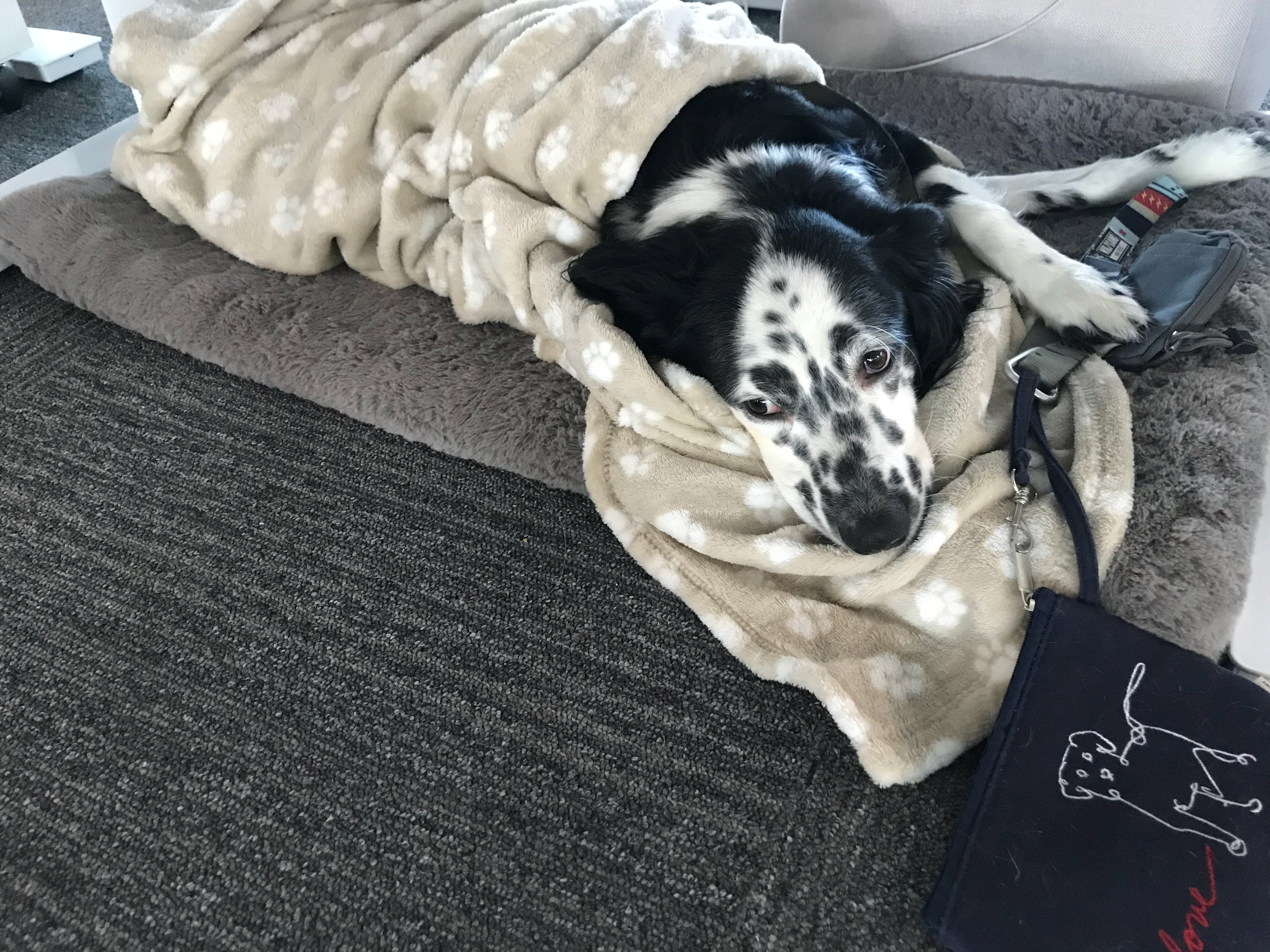 dog-lakai-in-bed.jpg