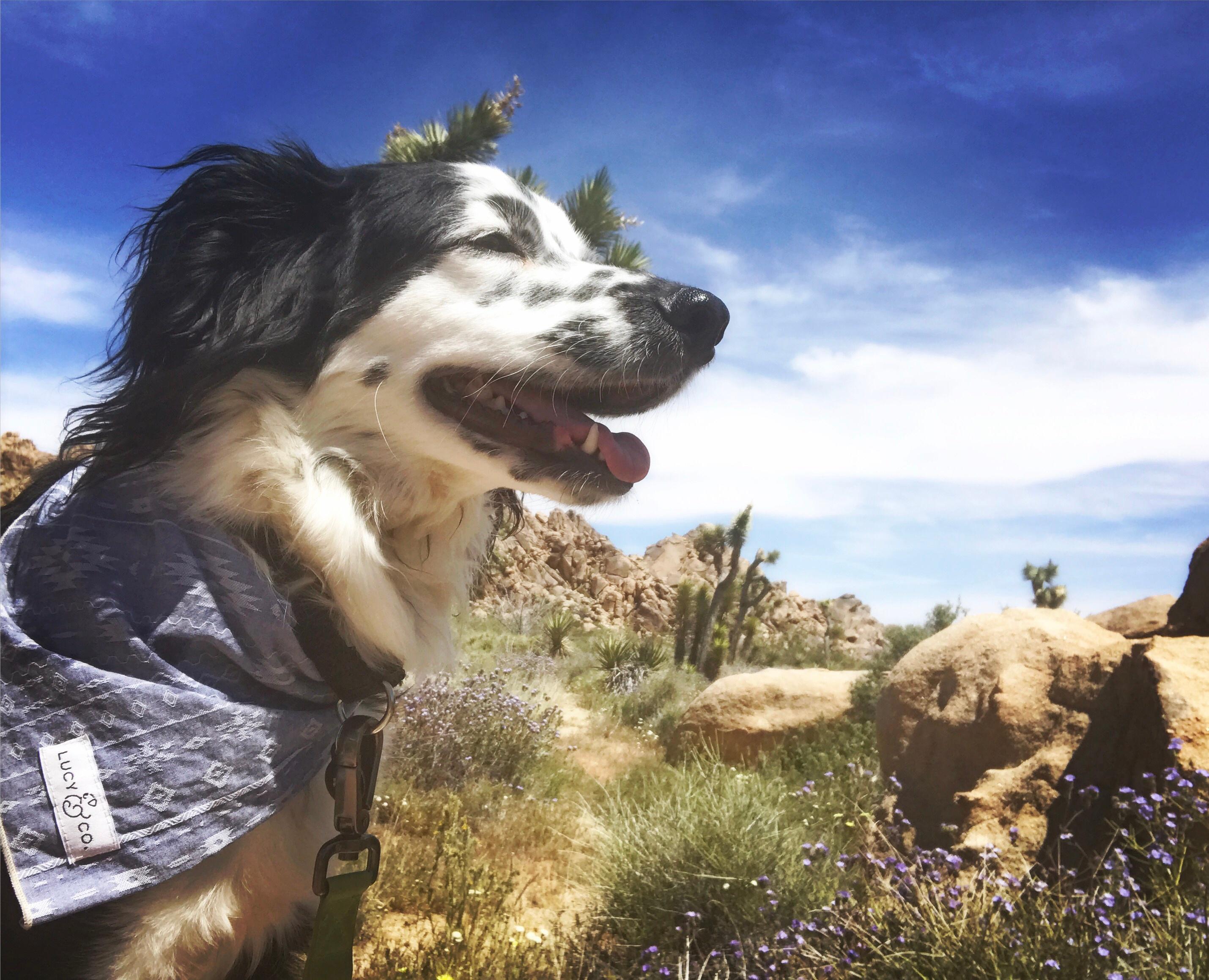dog-lakai-hiking.jpg