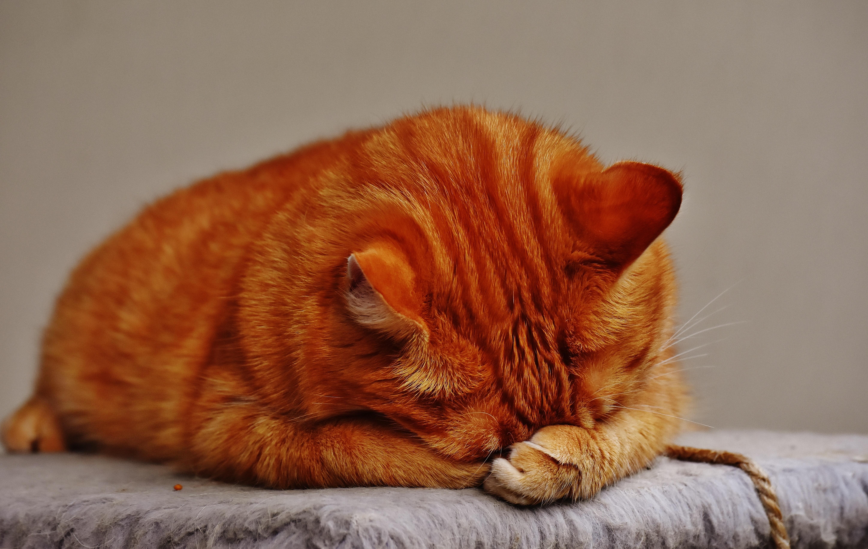 adorable-animal-cat-209069