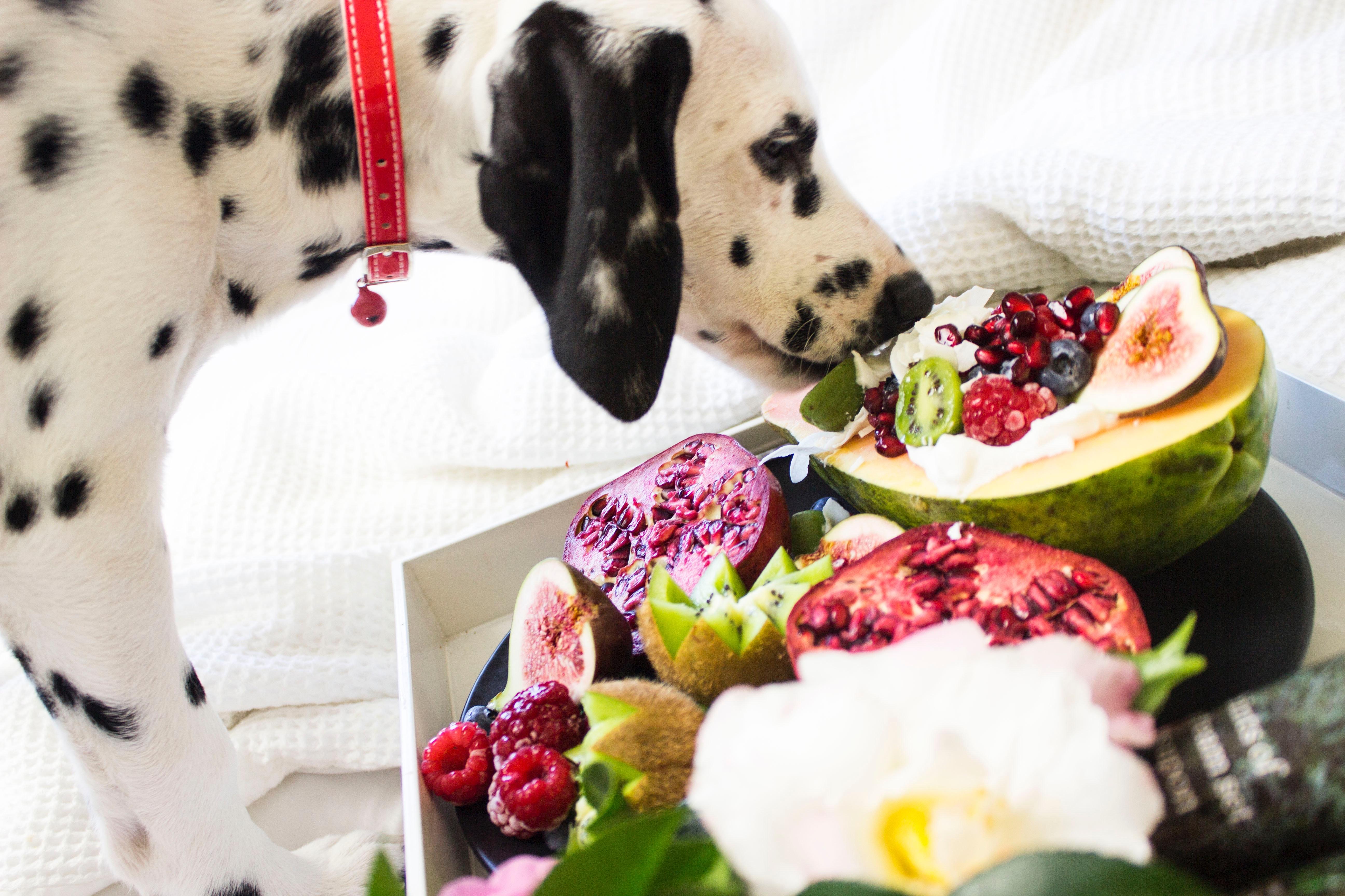 dalmatian-eating-fruit