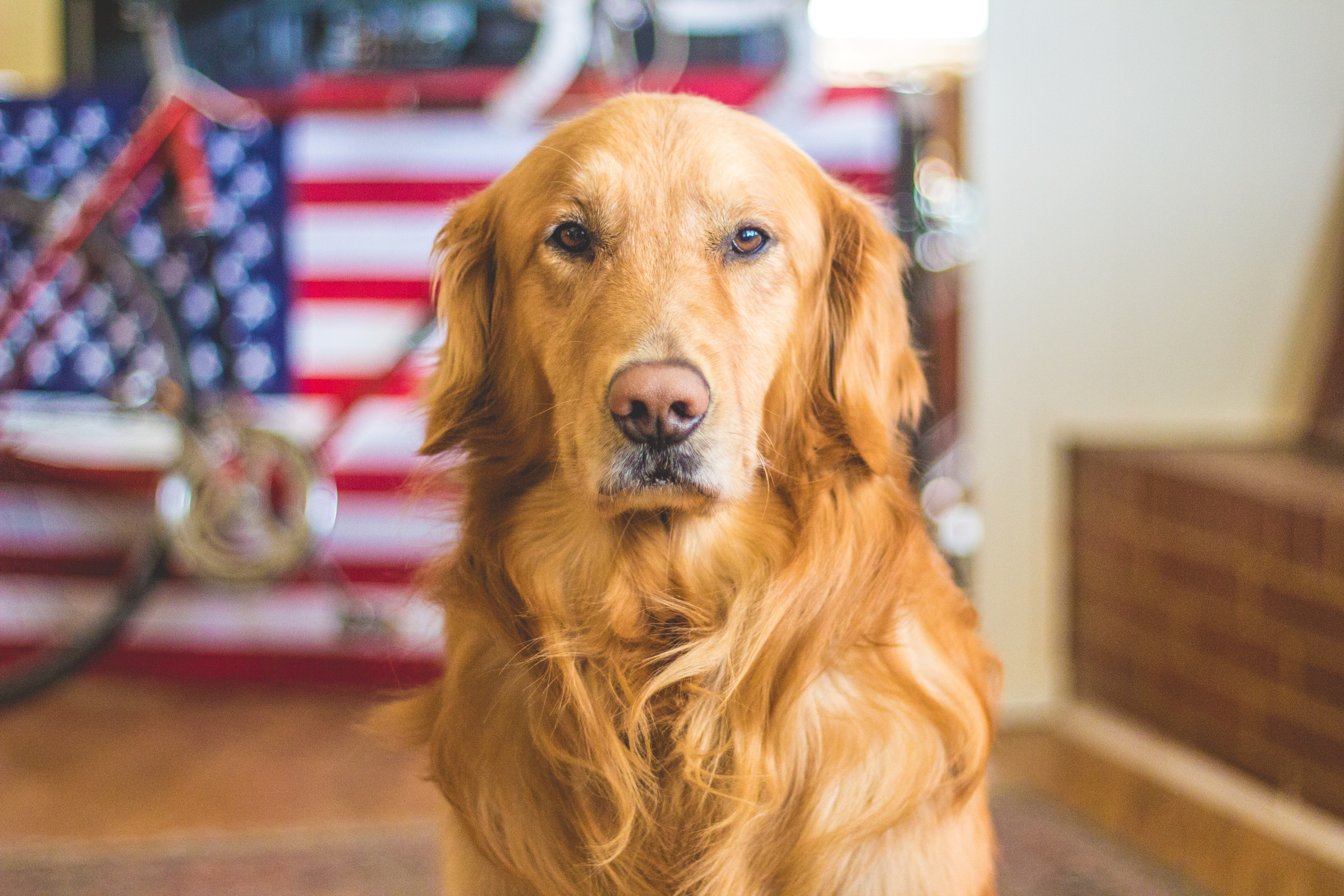 6-tips-to-keep-pets-safe-this-4th-of-July