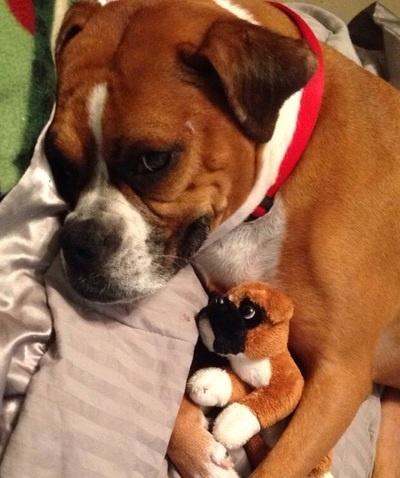 Cute Dog and Mini Dog