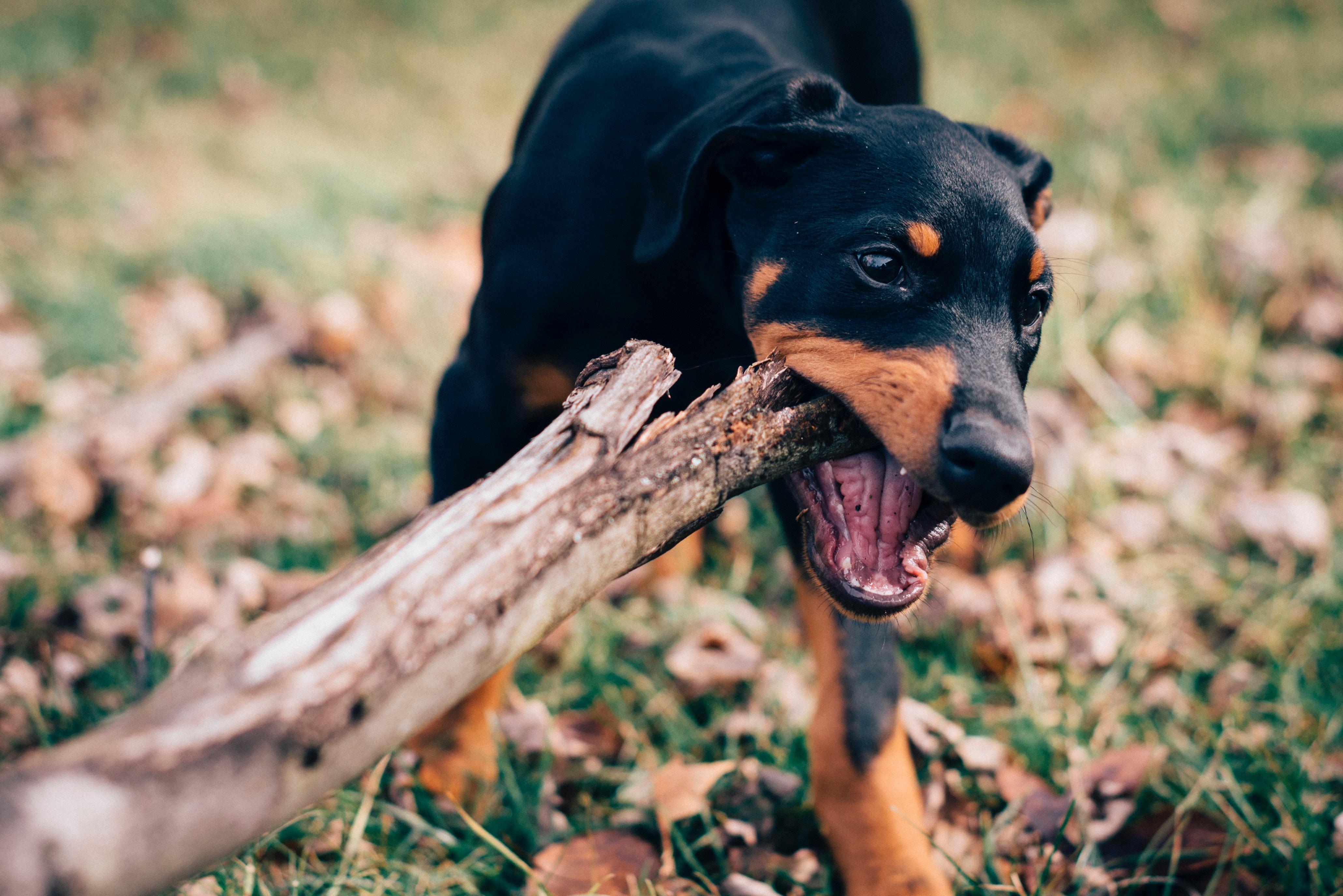 veterinary-clinic-loyalty