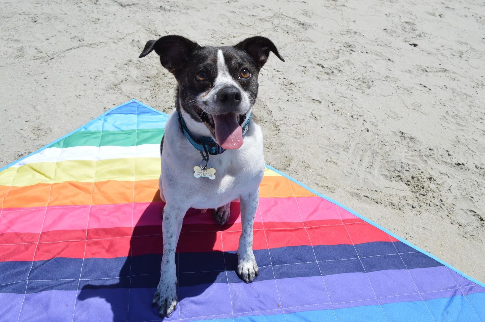 pierre-dog-at-beach